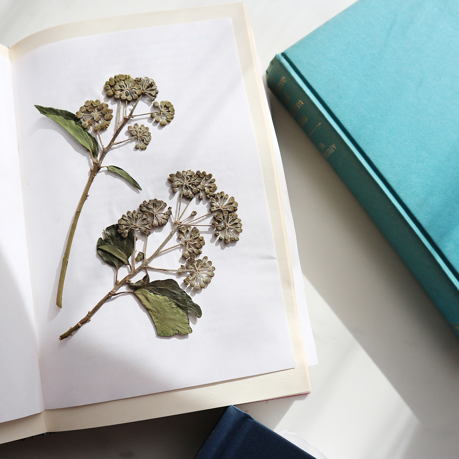 Pressing Flowers using a Book